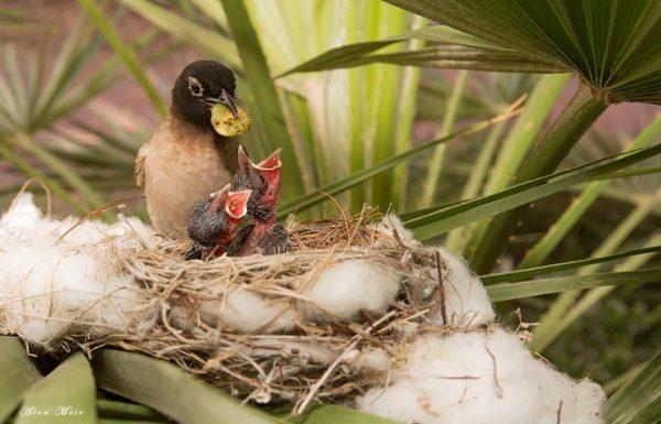 להסתכל לטבע בעיניים- חדשות מהחצר