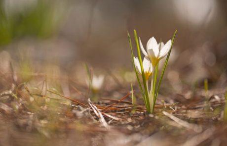 להסתכל לטבע בעיניים  – ילדי הפרחים