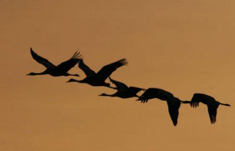 להסתכל לטבע בעיניים – ציפורים בראש
