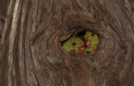 להסתכל לטבע בעיניים – ירוק עולה – הדררה המצויה