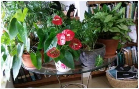 תרומת הצמחים לבית ולמשרד